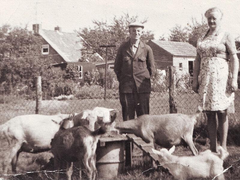 Noordbarger geitenfokkers, vooruit met de geit
